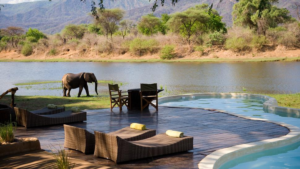 купание рядом со слонами в Chongwe River House