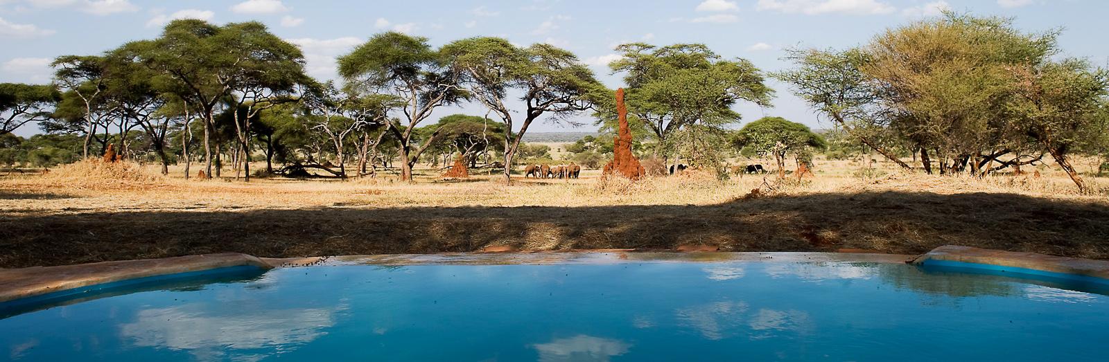 Sanctuary Swala pool - сафари не выходя из бассейна