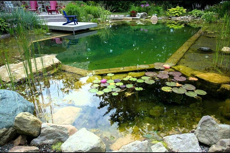 Красивый пруд как место для плавания