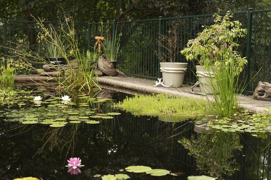 Пруд для купания на загородном участке